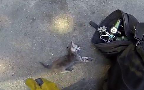 fireman rescues cat