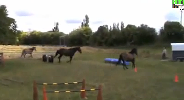 trained horses